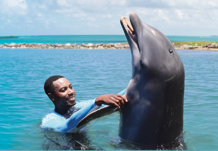 Dolphin Cove prices,  Dolphin Cove Jamaica,  Jamaica weather